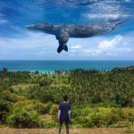 Beginilah Cara Edit Foto Ikan Paus Yang Melayang di Langit
