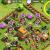 Cara Cheat Game COC ( Clash of Clans) Tanpa Root